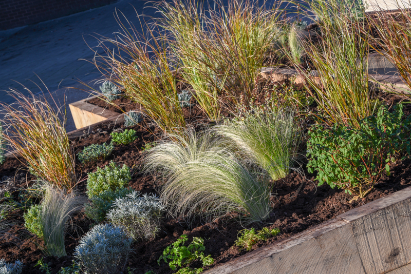 Artistic view of planting in one of the new flower beds in St Olaves precinct, Bury St Edmunds